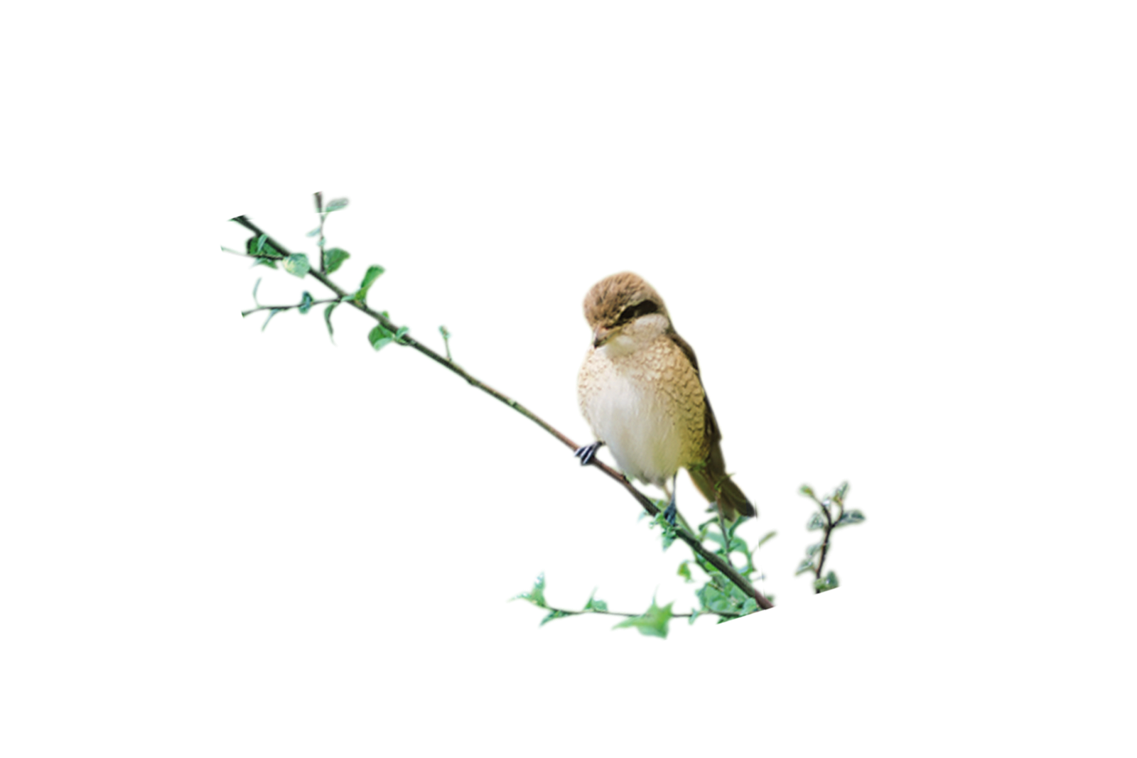 birds.png  My Blog