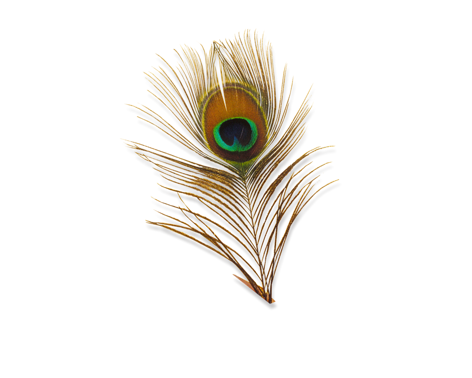 Beautiful peacock feathers eye : My Blog